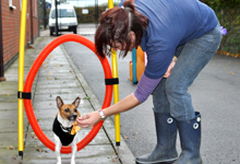 Dog Training image