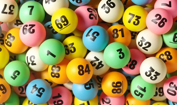 Play our lotteries and our animals are winners every time!