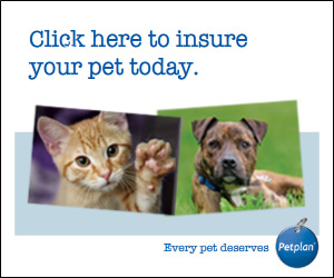 Click here to insure your pet today