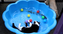 Enrichment at Leicester Animal Aid feature image