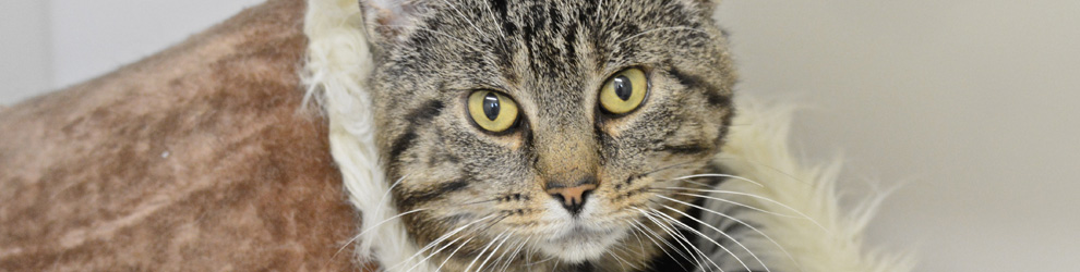 Adopt & Rehome a Cat - Leicester Animal Aid feature image