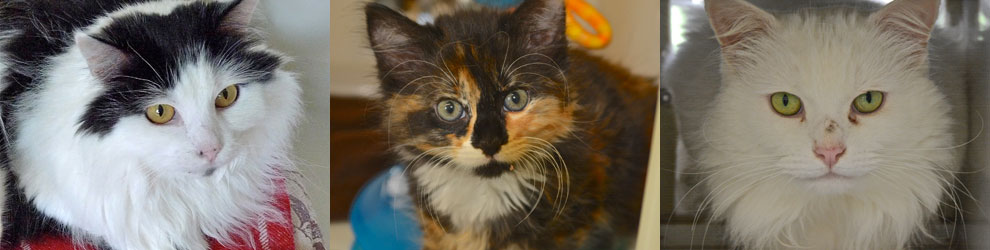 Rehoming Process - Cats - Leicester Animal Aidfeature image