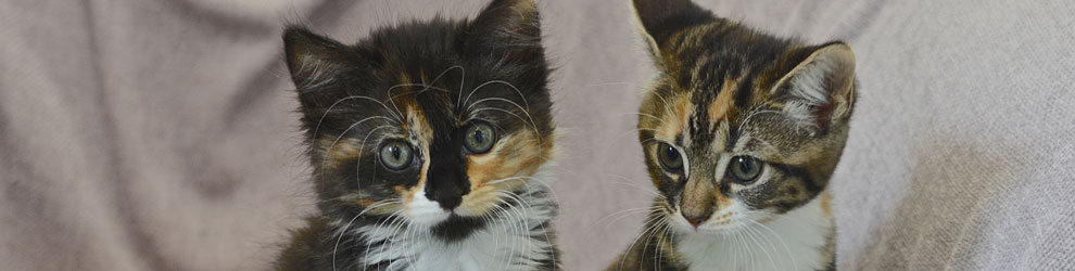 Do you have any kittens for rehoming? - Leicester Animal Aidfeature image
