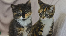 Do you have any kittens for rehoming?
